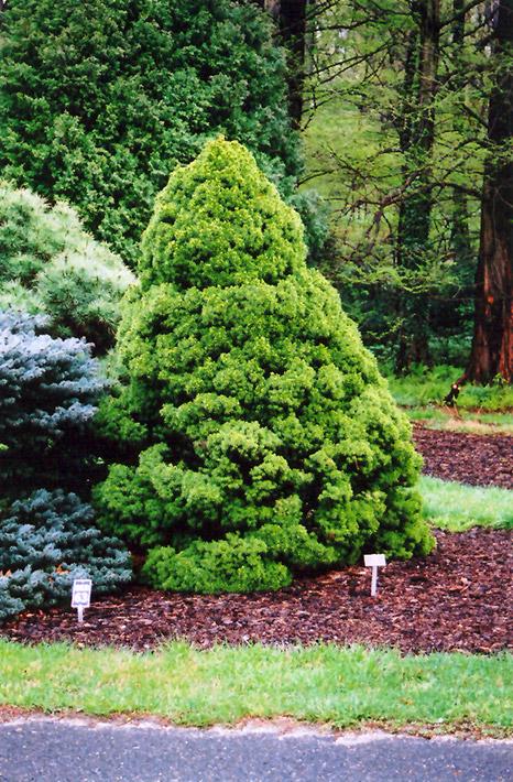 Garden Ridge Christmas Tree